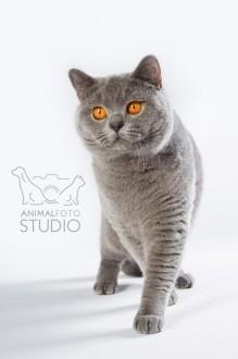 Wystawa-kotów-25-26.02.20176309-Marta-Sieniecka