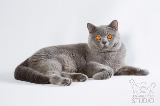 Wystawa-kotów-25-26.02.20176341-Marta-Sieniecka