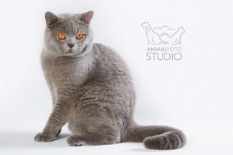 Wystawa-kotów-25-26.02.20176303-Marta-Sieniecka