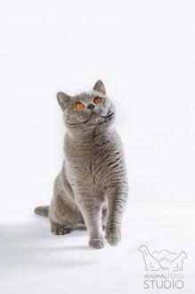 Wystawa-kotów-25-26.02.20176308-Marta-Sieniecka