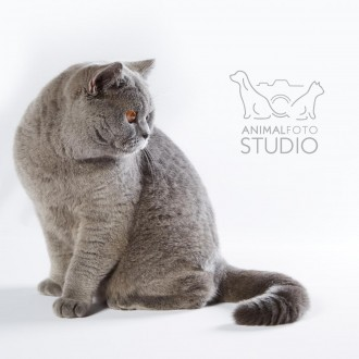 Wystawa-kotów-25-26.02.20176314-Marta-Sieniecka
