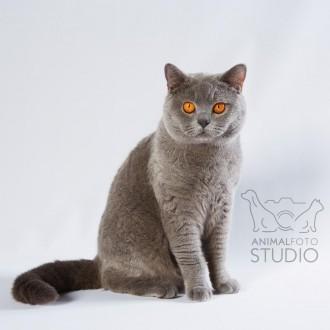 Wystawa-kotów-25-26.02.20176320-Marta-Sieniecka