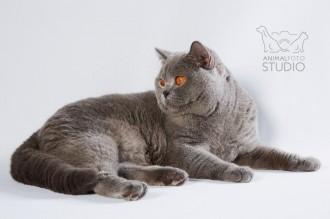 Wystawa-kotów-25-26.02.20176325-Marta-Sieniecka